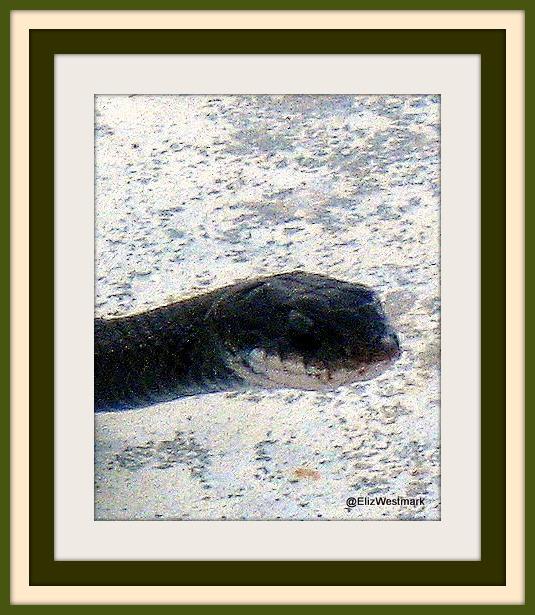Black snake framed